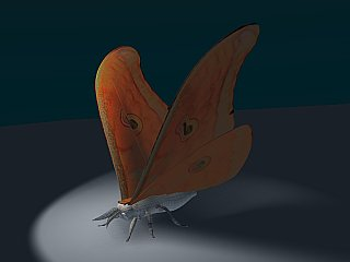 Blender screenshot of 3D moth model in progress, now with basic uv texture