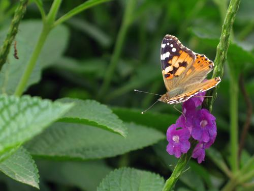 Butterfly on a flower - Mahim Nature Park