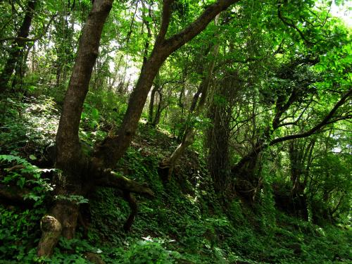 Forest slopes - Sanjay Gandhi National Park