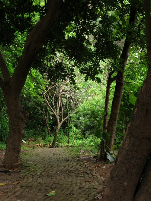 Path through the trees - Mahim Nature Park