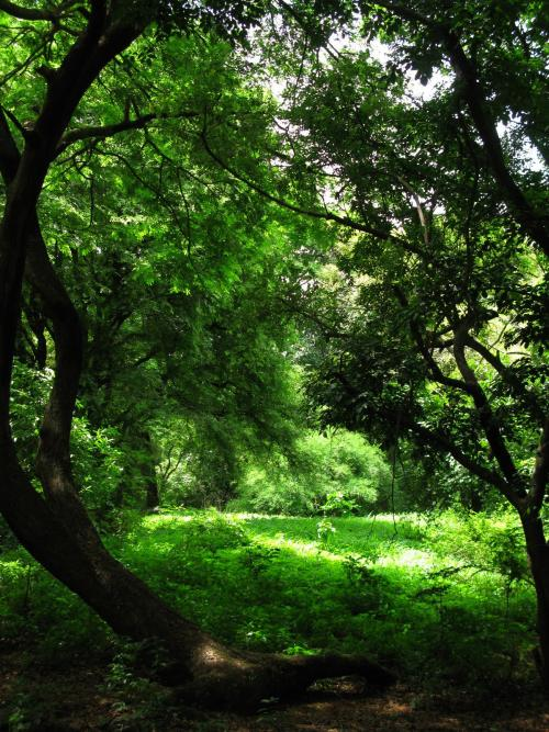 Sunlit meadow - Sanjay Gandhi National Park
