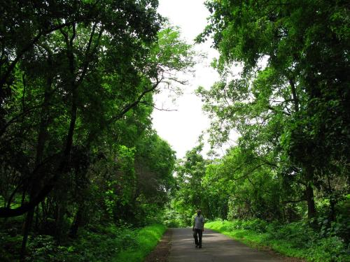 Walking on the forest road - Sanjay Gandhi National Park