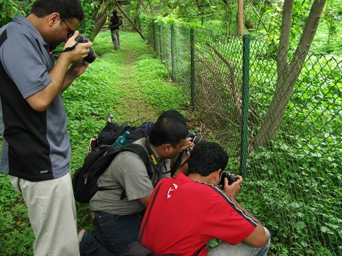 When photographers attack - Mahim Nature Park
