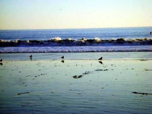 Birds at the surf