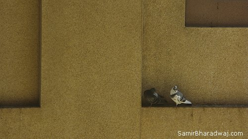 Pigeons on a ledge - Widescreen photo