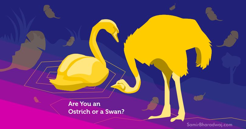 Swans and ostrich facing off - Are You an Ostrich or a Swan?